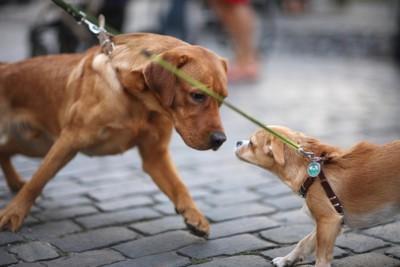体格差のある犬二匹