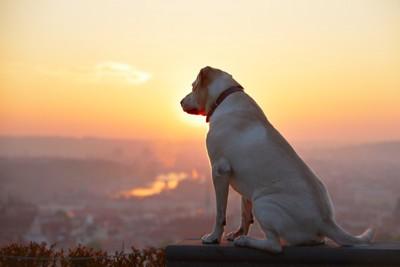 朝日を見ている犬