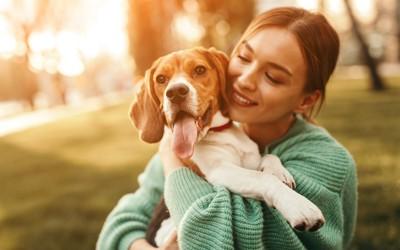 女性に抱っこされるビーグル犬