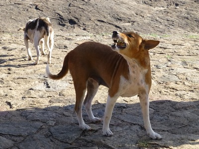 外で吠える犬
