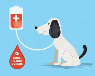 献血中の犬