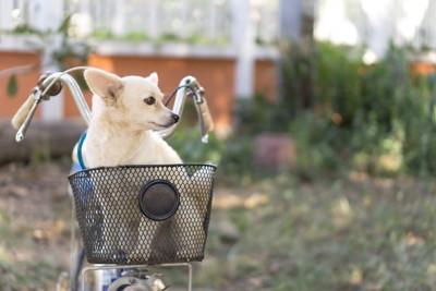 自転車のかごの中で飼い主を待つ犬
