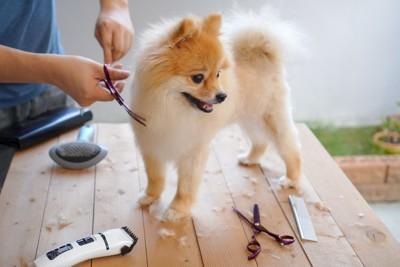 台の上でトリミングしてもらっている犬