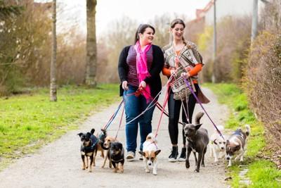 散歩する沢山の犬