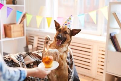 ホームパーティーにお呼ばれされた犬