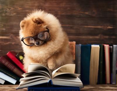 眼鏡をかけて本を読むポメラニアン