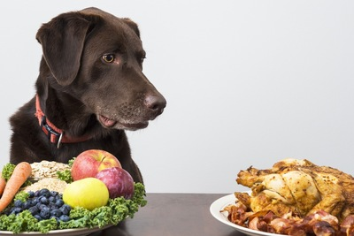野菜と肉を目の前にする犬