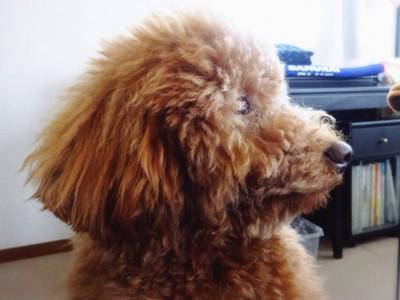 犬が目をそらした表情