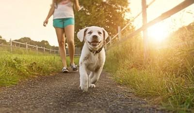少女と嬉しそうに散歩する子犬