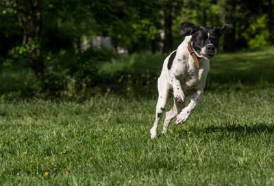 獲物を追いかける犬
