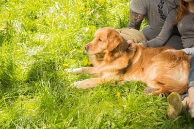 芝生の上で撫でられる犬