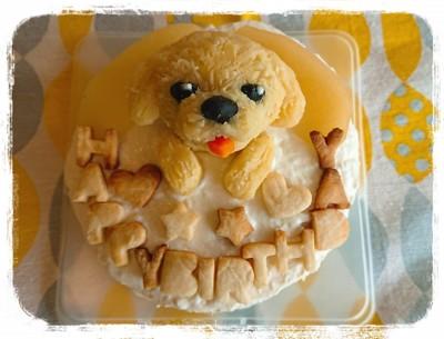 ドッグケーキ写真