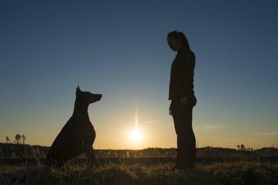 向き合う犬と女性のシルエット