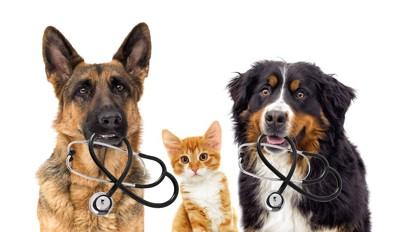 聴診器をくわえた2匹の犬と猫
