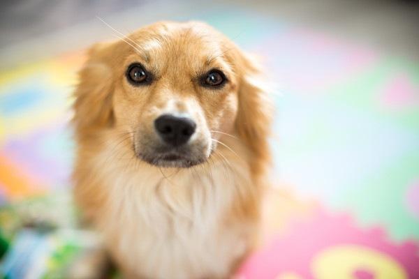こちらを見つめている迷い犬