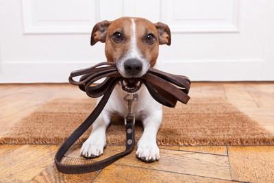 リードを咥えてマットの上で待つ犬