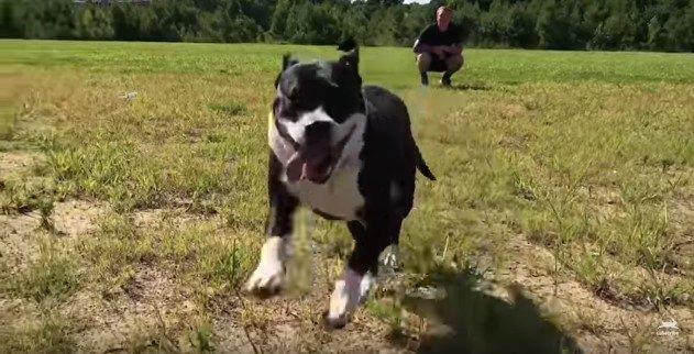 走るエリー