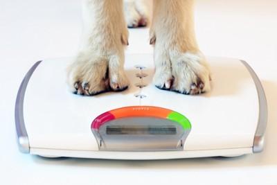体重計に乗る犬の足