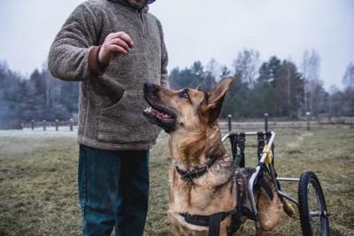 犬と車椅子