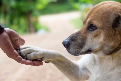 飼い主にお手をする茶色い犬