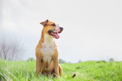 伸びた芝生に座っている垂れ耳の犬