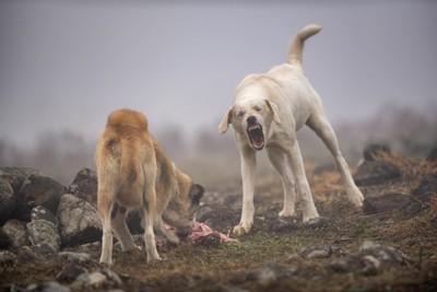 野生の犬たち