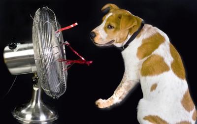 扇風機の前に座り涼んでいる犬
