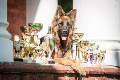 たくさんのトロフィーとチャンピオン犬