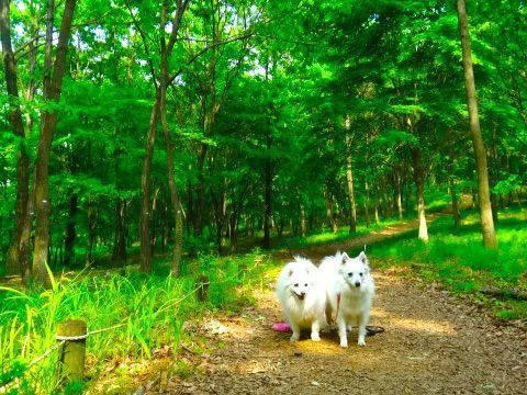 木漏れ日の中の犬