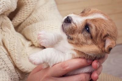 抱っこされている子犬