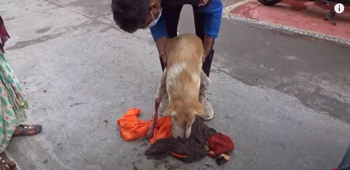 母犬を保護します