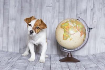 地球儀の横で首をかしげる犬