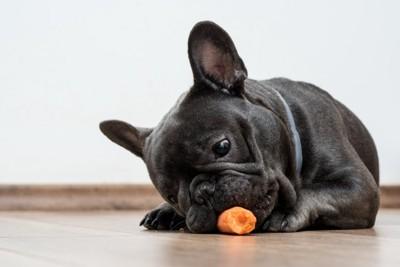 にんじんをかじる犬