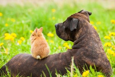 犬の背中に座るうさぎ
