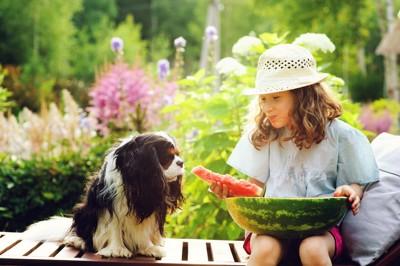 スイカを食べる女の子の隣に座る犬