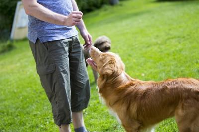 おやつを持つ飼い主を見つめる犬