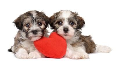 赤いハートと2頭の子犬