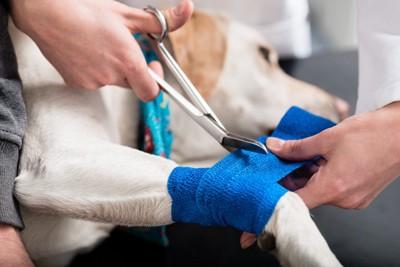 足の治療をされている犬