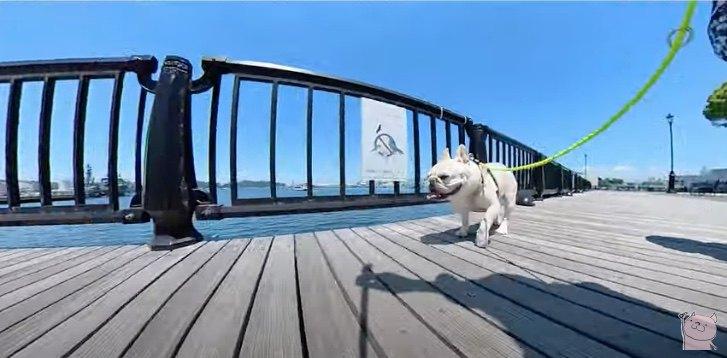 海沿いをお散歩中