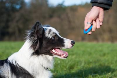 クリッカーと犬