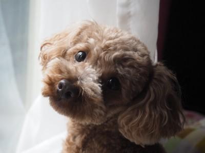 犬が理解しやすい 名前 とは わんちゃんホンポ