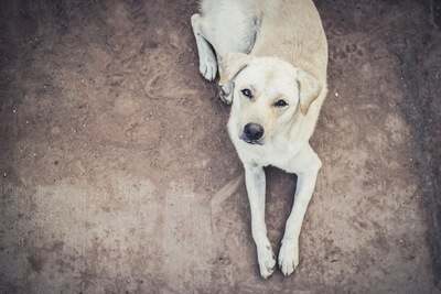 こちらを見上げて見つめる犬