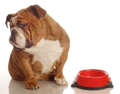 赤いフード皿とそっぽを向く犬