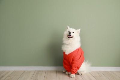 服を着て座っている犬