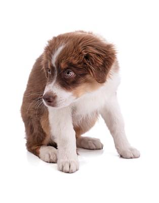 落ち込んでいる茶色の犬