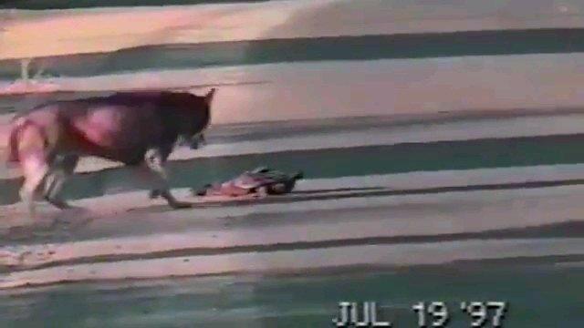 犬と死んだふりをする鴨