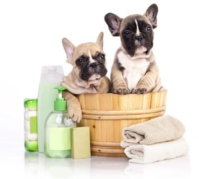 お風呂グッズと犬