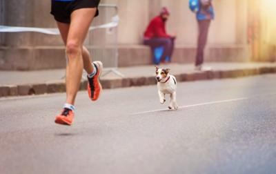 人を追いかけて走る犬