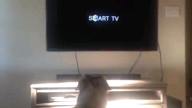 テレビにロゴ映る