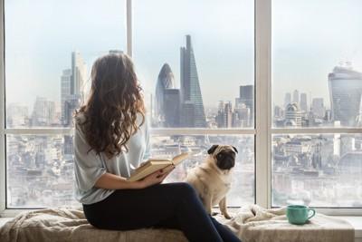 窓辺に座る女性とパグ